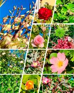 zuhause, im glück, pflanzen, blumen, glücklichsein, natur, blüten