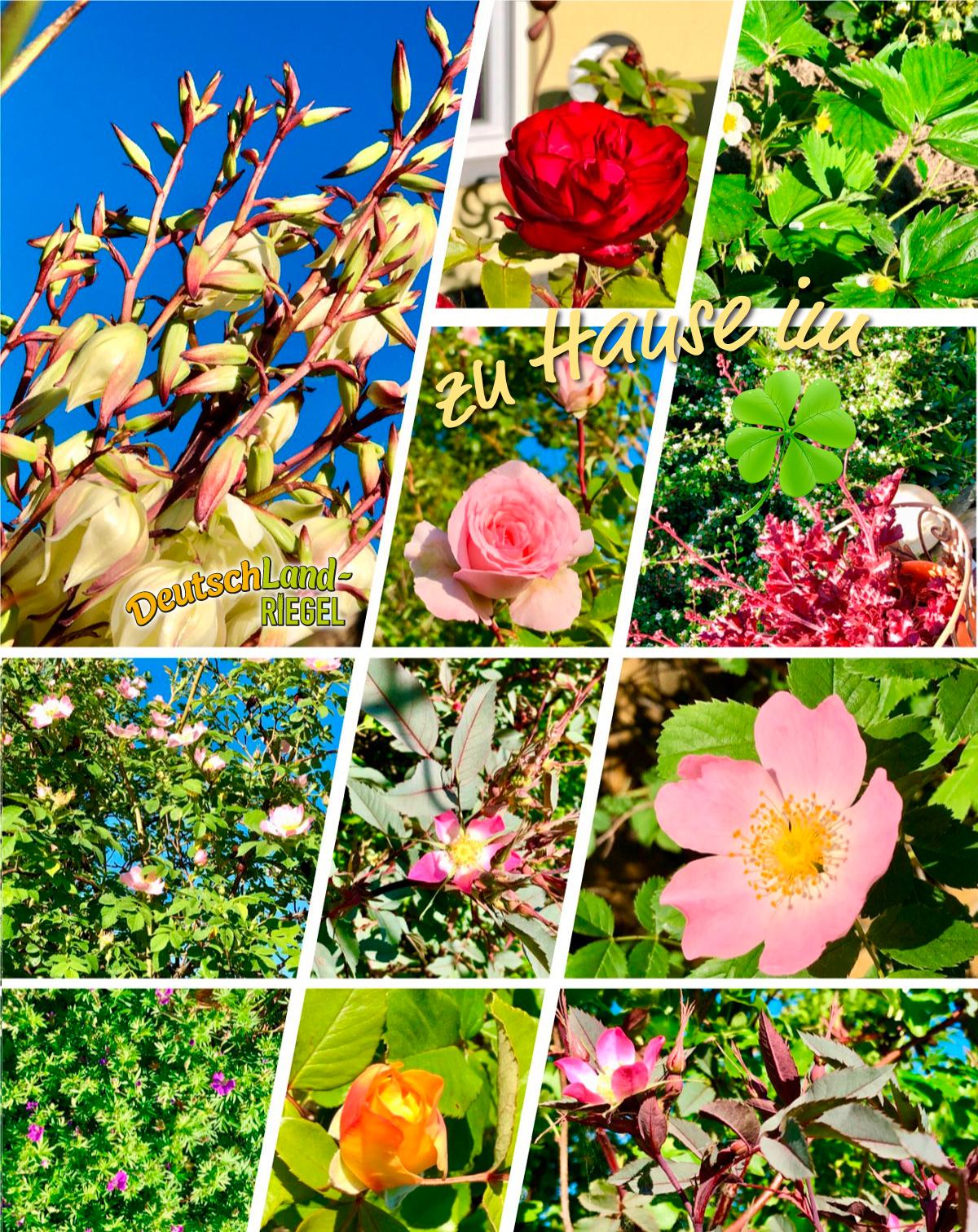 #zuhause, imglück, pflanzen, blumen, glücklich-sein, natur, blüten