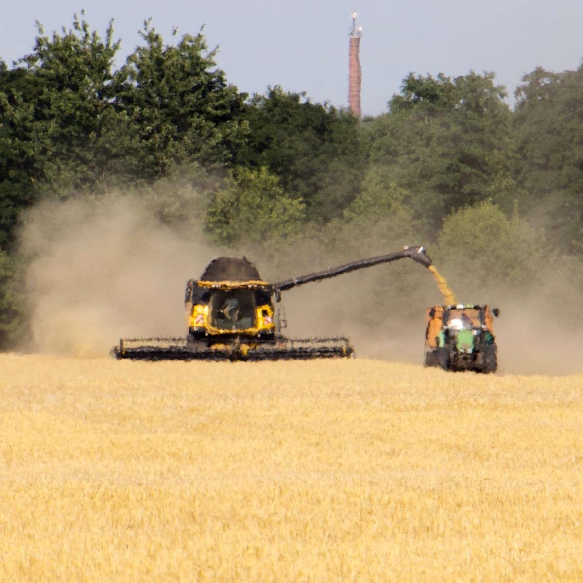 heiß, hitze, ernte, landwirtschaft, korn, arbeit, hart, fata, morgana