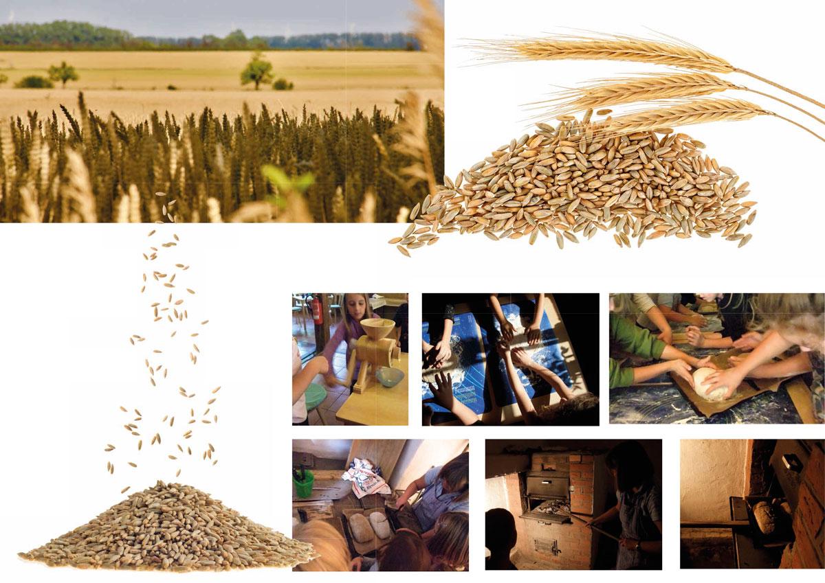 vom Korn zum Brot, die Zubereitung von richtig echtem selbstgebackenem Brot, NABU Zentrum, Klassenfahrt