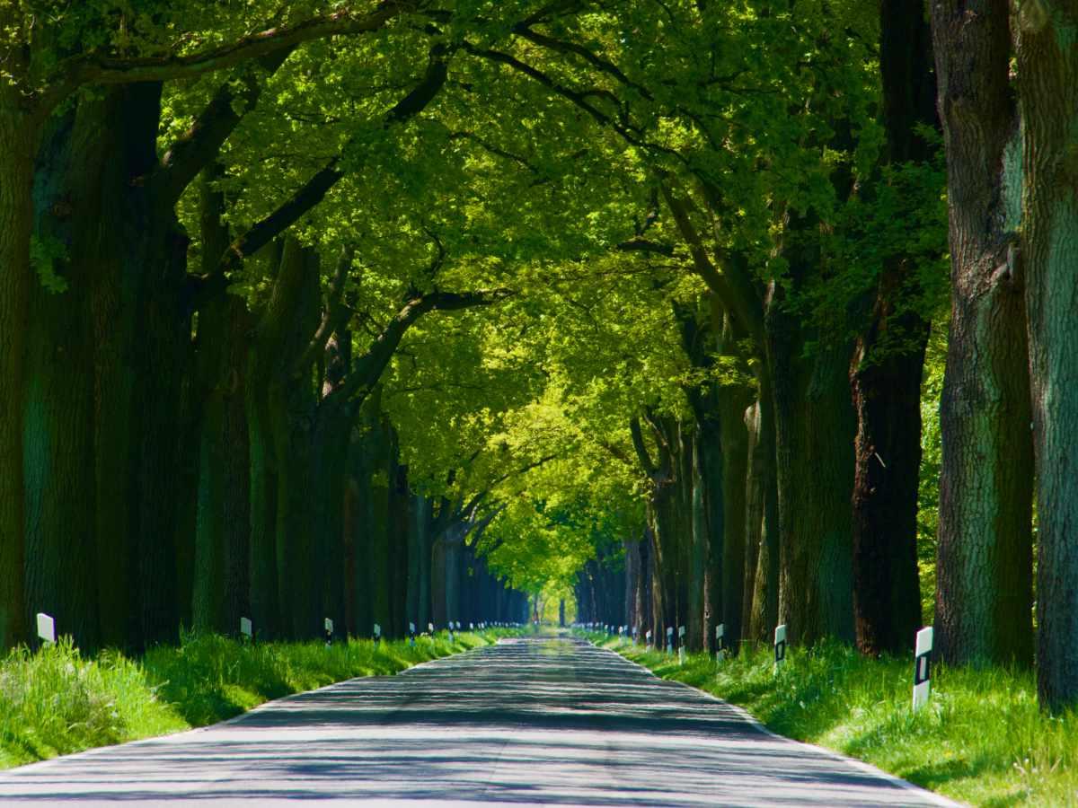 Straße, Bäume