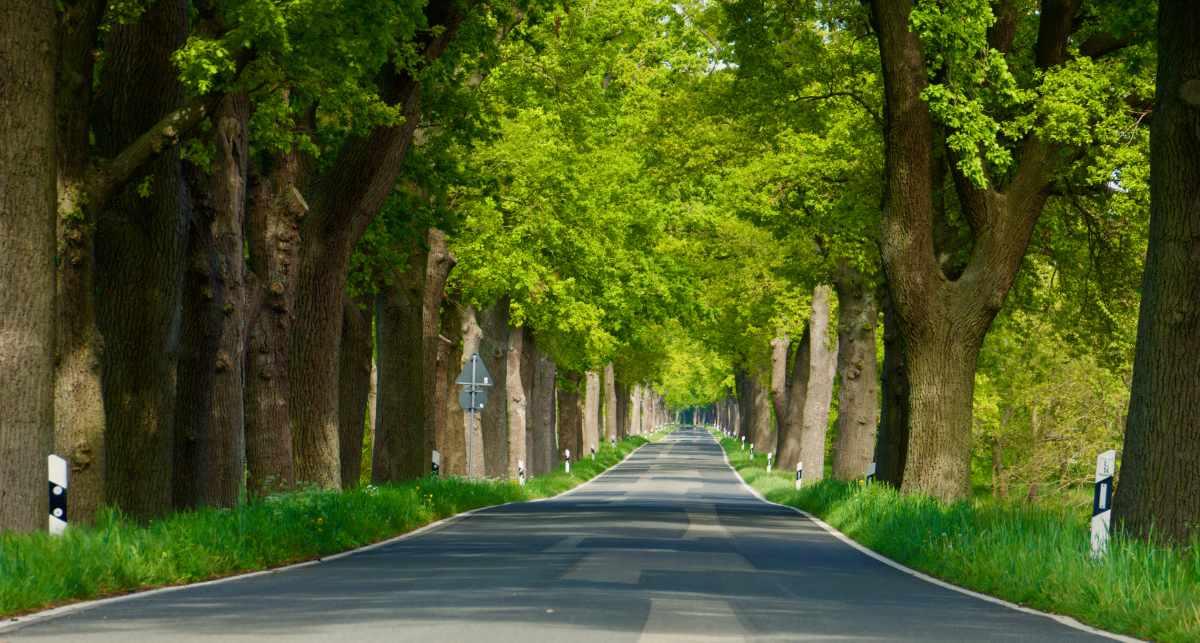 Straße, Natur, unsere Heimat